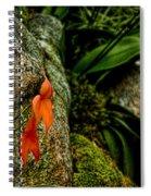 Delicate Orange Spiral Notebook
