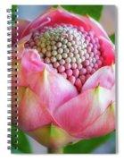 Delicate Pink Bud Waratah Flower Spiral Notebook