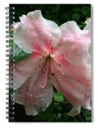 Delicate Pinks In Rain - Flower Photography Spiral Notebook