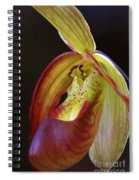 Delicate Slipper Spiral Notebook