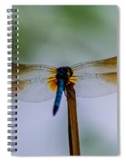Delicate Wings Spiral Notebook