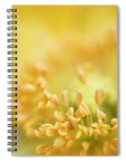 Delicate Yellow Poppy Spiral Notebook