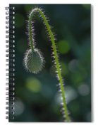 Delicately Waiting Spiral Notebook