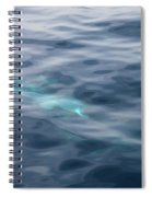 Delphin 1 The Mermaid Spiral Notebook