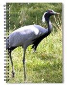 Demoiselle Crane Spiral Notebook