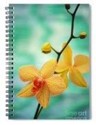 Dendrobium Spiral Notebook