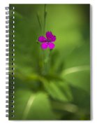 Deptford Pink Dianthus Flower Spiral Notebook