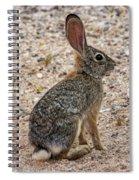 Desert Cottontail 1822 Spiral Notebook