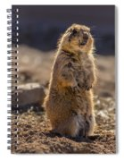 Desert Dawg Spiral Notebook