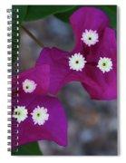 Desert Flower 2 Spiral Notebook