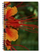 Desert Flower Spiral Notebook