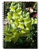 Desert Flowers Virginia City Nevada Spiral Notebook