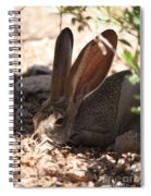 Desert Jackrabbit Spiral Notebook