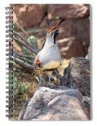 Desert Quail Spiral Notebook