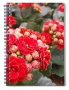 Desert Rose Spiral Notebook