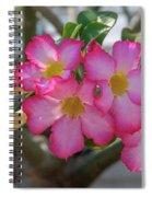 Desert Rose Or Chuanchom Dthb2105 Spiral Notebook