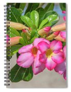 Desert Rose Or Chuanchom Dthb2106 Spiral Notebook