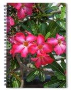 Desert Rose Or Chuanchom Dthb2107 Spiral Notebook
