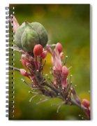 Desert Seed Pod 2 Spiral Notebook