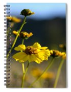 Desert Sunflower Spiral Notebook