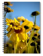 Desert Sunflower Variations Spiral Notebook