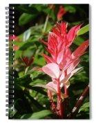Devils Blush - Australian Native In Blue Mountains Spiral Notebook