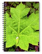Devil's Club Leaf Spiral Notebook