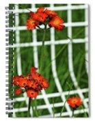 Devil's Paintbrush Framed Spiral Notebook