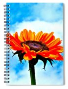Devotion Spiral Notebook