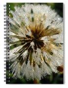 Dew Covered Dandelion Spiral Notebook