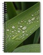 Dew Drops On Leaf Spiral Notebook