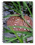 Dew It At The Creek Spiral Notebook