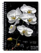 Dew-kissed Cascading Orchids Spiral Notebook