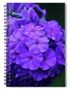 Dew Kissed Summer Phlox Spiral Notebook
