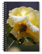 Dewy Yellow Rose 1 Spiral Notebook