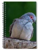 Diamond Dove Spiral Notebook