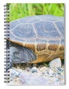 Diamondback Terrapin Spiral Notebook