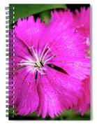Dianthus First Love Flower Print Spiral Notebook