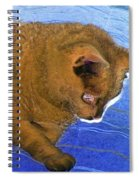 Did Mean Cat Get Under The Bed Again Spiral Notebook