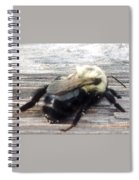 Different Take Of A Bee Spiral Notebook