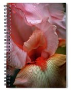 Digital Oil Painting Pink Iris 9915 O_2 Spiral Notebook