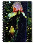 Digital Painting Pink And Yellow Iris 6758 Dp_2 Spiral Notebook