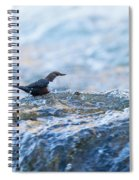 Dipper Searching For Food Spiral Notebook