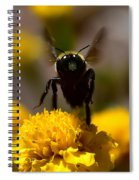 Disappearing Wings Spiral Notebook