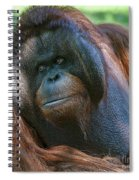 Disapproving Glance Spiral Notebook