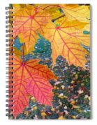 Distinctive Maple Leaves Spiral Notebook