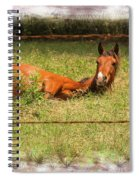 Disturbed Napping Spiral Notebook