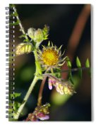 Divine Natural Creations Spiral Notebook