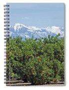 Dm6850-e Orange Grove And The Sierra Nevada Ca Spiral Notebook