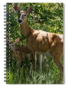 Doe And Fawn Spiral Notebook